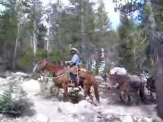 John Muir Trail Cowboy & Pack Mules Katy & Dani...check this out...it's Luke! Can't tell what trail though..maybe to sunrise?