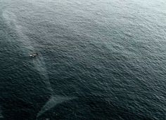 Una gran ballena andaba paseando por el océano, probablemente el tipo del bote no se dio cuenta.