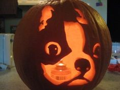 Carved Pumpkin of a Boston Terrier dog named Angus!