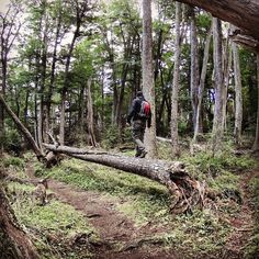 Y vamos pa adelante con fuerza de gigante  #trekking #outdoors #pin