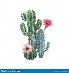 Flower Art Drawing, Cactus Drawing, Cactus Painting, Cactus Art, Watercolor Plants, Watercolor Art, Cactus Clipart, Mexican Paintings, Watercolor Beginner