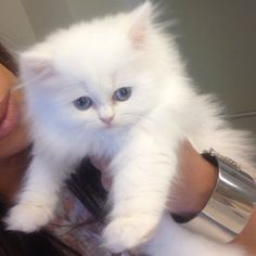 Kim Kardashian's sad persian teacup kitten mercy