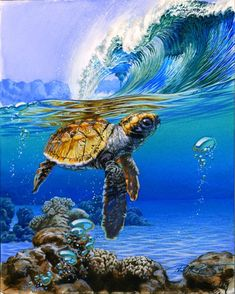 """Baby Sea Turtle - """"Duck Dive"""" Fine art print- Island Collection by Phil Roberts by BeachesAndCoconuts on Etsy Sea Turtle Painting, Sea Turtle Art, Turtle Love, Baby Sea Turtles, Art Plage, Art Sur Toile, Surf Art, Sea Waves, Ocean Art"""