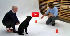 When I Got To The 9:56 Mark Of This Video, I Wanted To Go Home And Hug My Dog Immediately! I Had No Idea They Did This! | The Animal Rescue Site Blog
