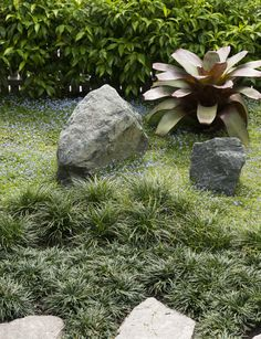 A beautiful planting plan for a tiny front garden - Homes To Love - Blue Star Creeper (Isotoma) Mondo Grass, Tropical Garden, Garden, Front Garden, Outdoor, Small Garden Design, Grass Pavers, Planting Plan, Dwarf Mondo Grass