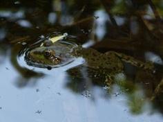 Frog - Botanical Garden #Strasbourg  photo : Shehrazad