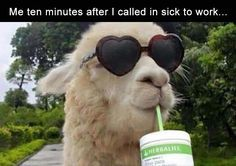 Except I am always calling off for sick kids but this is funny. Best Memes, Funny Memes, Jokes, Funny Cute, Hilarious, Hate My Job, Funny Llama, Lol, Nursing Memes