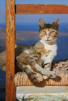<3 <3  -Picture was taken in Fira on Santorini, Greece