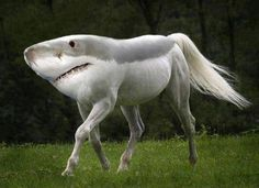 This is a sharse, it is extremely rare and has only been captured on photo a few times!