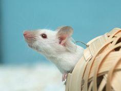 Aww! Miss my rats.