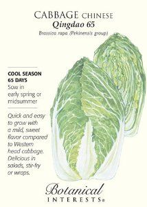 'Qingdao 65' Chinese Cabbage Seeds - 2 grams by Hirts: Seed; Vegetable. $1.99. Ideal for short seasons and quick cropping. 2 grams of seed. 5 Days to Maturity. Also called Napa cabbage. Sow it in the spring for young salad leaves or in late summer for a fall crop of full-sized cabbages. 65 days. Also called Napa cabbage, Qingdao 65 (pronounced Ching-dow) has a delicate flavor, a soft texture in between that of lettuce and regular cabbage, and is easy to digest. This ...