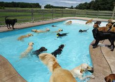 Pool party at Lucky Puppy County Doggy Daycare