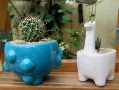 cactus pots Macetas para cactus