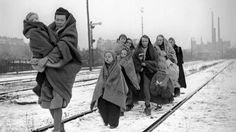 DERUWA: Ein Vergleich - Deutsche Flüchtlinge und wie sie u...