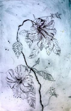 Hibiscus Drypoint Etching by Jet James