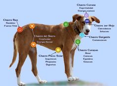 Resultado de imagen de chakras en los perros