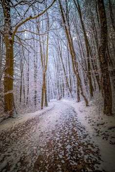 Wintry lane in the woods (no location given) by John Noe / 500px