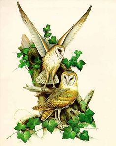 Roger ToryPeterson - Barn Owl