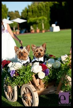 Dogs in wedding party Montecito Wedding Photography