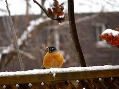 Check out these tips for caring for the feathered visitors in your backyard. :-)