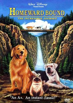 """I just like movies about dogs and cats having adventures together. Bonus points for no one dying."" --Mary R"
