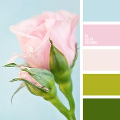 The combination of colors is filled with lush greenery and tenderness of blossoming rosebud, palette is complemented by soft blue color, which gives the im Palettes Color, Colour Pallette, Colour Schemes, Color Patterns, Color Combos, Spring Color Palette, Spring Colors, Palette Verte, Color Concept