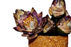 Lotus Flowers w/Pot - Decorated with Seashells and Sea Sand Lotus Flowers, Seashells, Decorative Items, Art Pieces, Wall Decor, House Styles, Handmade, Conch Shells, Wall Hanging Decor