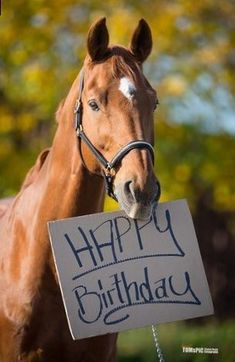 Image result for horse birthday