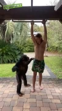 Funny Animal Videos, Funny Animal Pictures, Videos Funny, Best Funny Pictures, Monkey Funny Videos, Pet Videos, Funny Gifs, Cute Little Animals, Cute Funny Animals