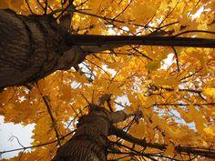 Fall 2012 - By Cheryl Andersen