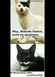 Hitler I ktoś tam😏 Animals And Pets, Funny Animals, Cute Animals, Wtf Funny, Hilarious, Bazar Bizarre, Weekend Humor, Funny Mems, Man Humor