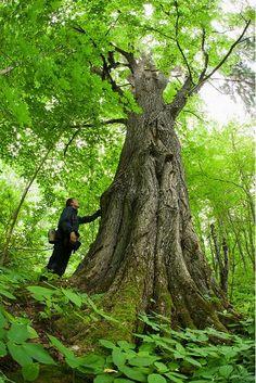 Beautiful Forests in Estonia #colourfulestonia #visitestonia