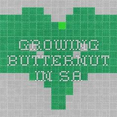 growing butternut in SA