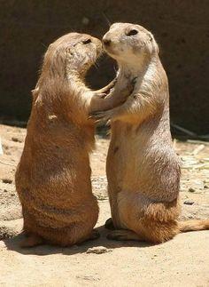 12 Cute Pictures of Animals Kissing ~ Amazing Animals Cute Animals Kissing, Cute Baby Animals, Funny Animals, Wild Animals, Talking Animals, Pictures Of Zoo Animals, Laika Dog, Animal Facts, Animal Antics