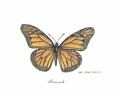 Monarch Butterfly | Monarch Butterfly, pen & ink drawing by Lee James Pantas