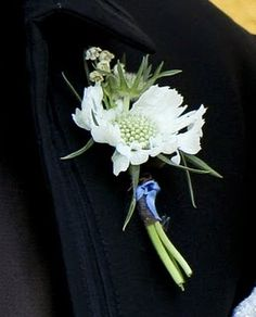 The groom's boutonniere will be white scabiosa, white astilbe, and silver brunia wrapped in raffia with the stems showing.