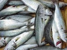 TurkExim : china frozen fish importers list- China Frozen Seafood Importers, China Frozen Seafood Importers Suppliers and Manufacturers Directory - Source a Large Selection of Frozen Fish Importers - Instantly Connect with Verified Frozen Fish Buyers & Frozen Fish Importers from China, USA, India at TurkExim-Fish Buyers,Fish Manufacturers,Fish Suppliers,Fish Exporters,Fish Importers,FishProducts,Fish Trade Leads,Fish & Fish Products from China