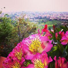 Ancora un grazie a Marina per questi splendidi fiori.   #borgoagrumi