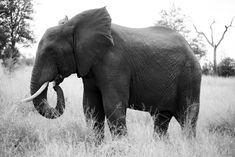 African Safari, Family Holiday, Tanzania, Lodges, Conservation, South Africa, Elephant, Travel, Animals
