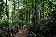 Bukit Timah Nature Reserve reopens after 2 years of restoration work