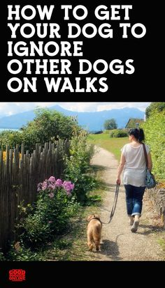 Snoopy Dog House How to Teach Your Dog to Ignore Other Dogs On Walks.Snoopy Dog House How to Teach Your Dog to Ignore Other Dogs On Walks Dog Grooming Shop, Dog Grooming Business, Unusual Dog Breeds, Best Dog Breeds, Giant Dog Breeds, Giant Dogs, Big Dog Toys, Snoopy Dog House, Dog Breed Names