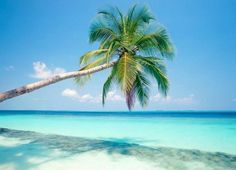 Isla Saona, Punta Cana (#RepúblicaDominicana) ➜ http://viajerosblog.com/isla-saona-el-paraiso-de-punta-cana.html… #turismo #viajes