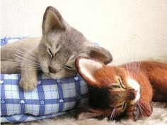 Needle felted sleeping kittens by Po*Pisolino from Japan.  Precious!
