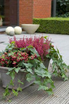 Jardini re d 39 hiver fleurs et v g tation pinterest - Jardiniere automne hiver ...