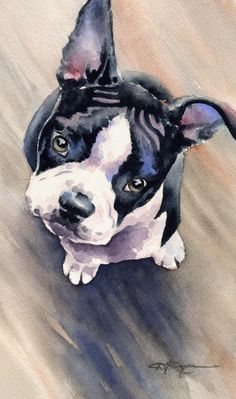 BOSTON TERRIER PUPPY Dog Art Print Signed by by k9artgallery