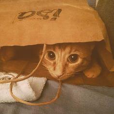 Nos alegra saber que el gato de nuestro cliente Calixto reutiliza las bolsas.. #morimosdeamor #madewithcariño #avila #lasrecetasdeisa