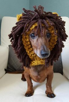 Keep your furry friend warm and cozy in this cute lion hood! Perfect for those chilly fall and winter walks or use as a costume. Handmade in chunky yarn in Goldenrod . Made for a small dog. Model is a Miniature Dachshund weighing approx. 12.5lbs. Hood is stretchy and could fit a slightly larger breed.