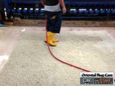 The Correct Mixture Of Carpet Cleaners in Kendall