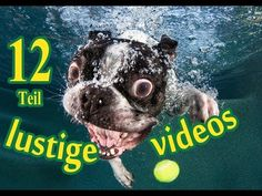 Funny Dogs Photography Boston Terriers 57 Ideas For 2019 Boston Terriers, Boston Terrier Love, Dogs Underwater, Underwater Photos, Underwater Photography, Funny Dogs, Cute Dogs, Funny Animals, Cute Animals
