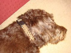 Picture of Paracord Dog Collar